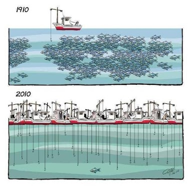 Mechanized fishing in the last 50 years
