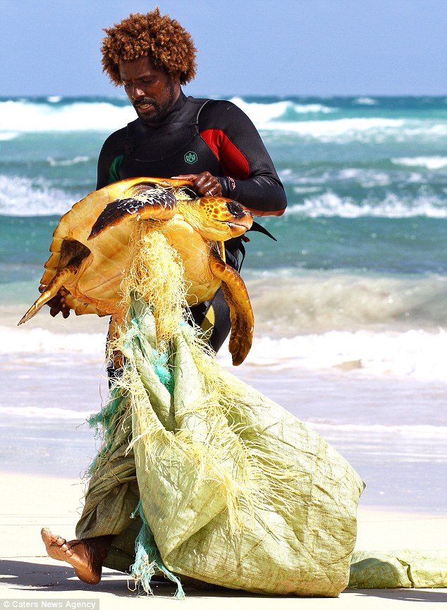 Sea turtle entangled with fishing line and debris